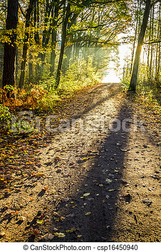 Yellow footpath in the autumn forest - csp16450940
