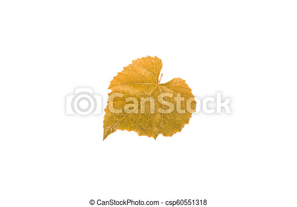 yellow grape leaf isolated on white background - csp60551318