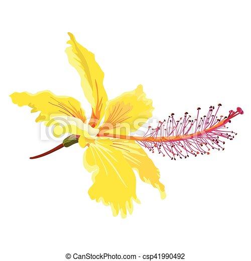 Yellow Hibiscus Flower Vector