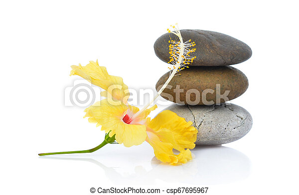 Yellow hibiscus flower with stones isolated on white background - csp67695967