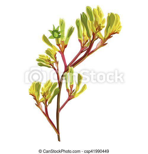 e2285143d Yellow kangaroo paw vector illustration. Yellow realistic close up ...