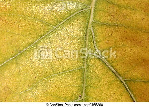 Yellow leaf - csp0465260