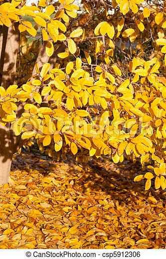 Yellow Leaves Falling Star Magnolia Tree In Autumn Bright Yellow