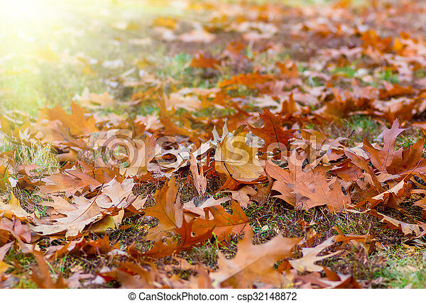 Yellow leaves in autumn background - csp32148872
