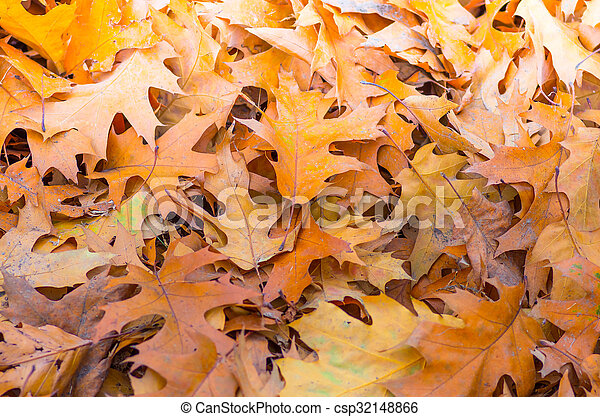 Yellow leaves in autumn background - csp32148866