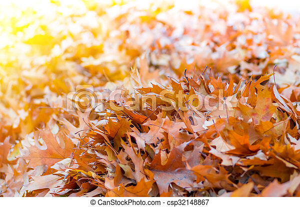 Yellow leaves in autumn background - csp32148867