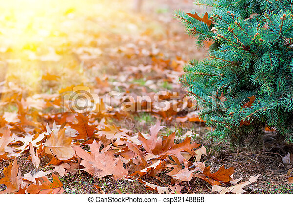Yellow leaves in autumn background - csp32148868