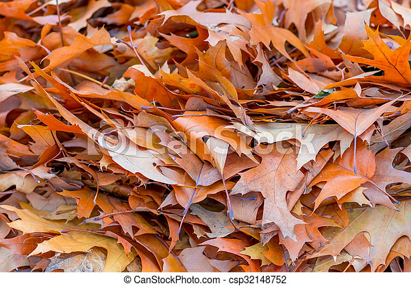 Yellow leaves in autumn background - csp32148752