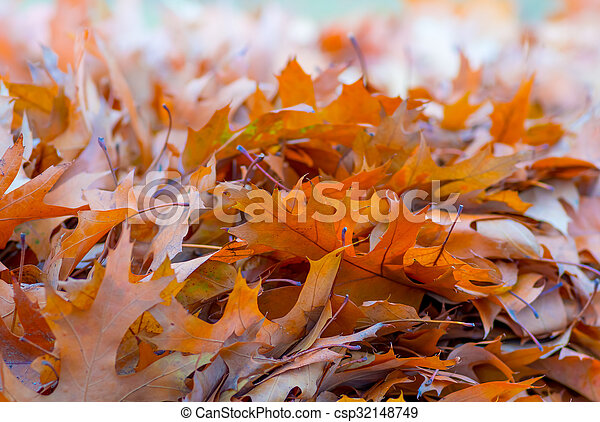 Yellow leaves in autumn background - csp32148749