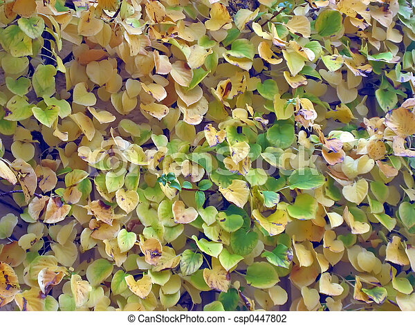Yellow Leaves on A Wall - csp0447802