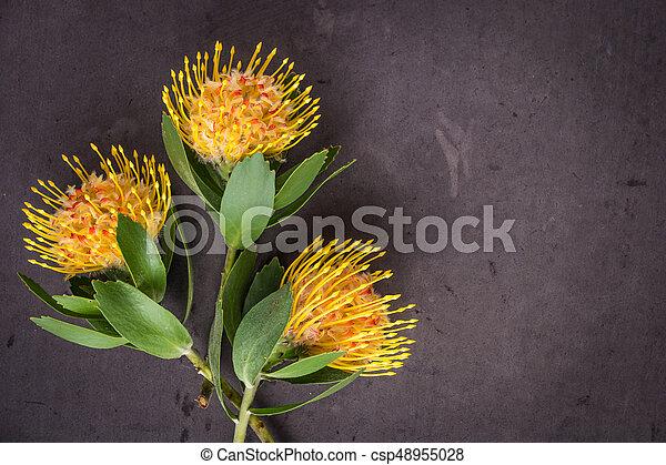 Yellow Leucospermum Cordifolium Flower Pincushion Protea