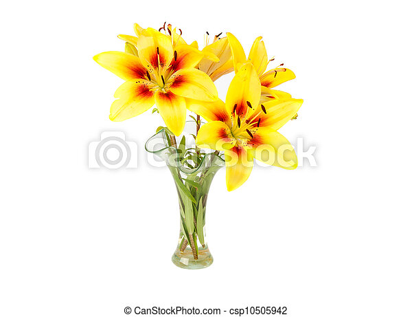 yellow lily in a vase - csp10505942