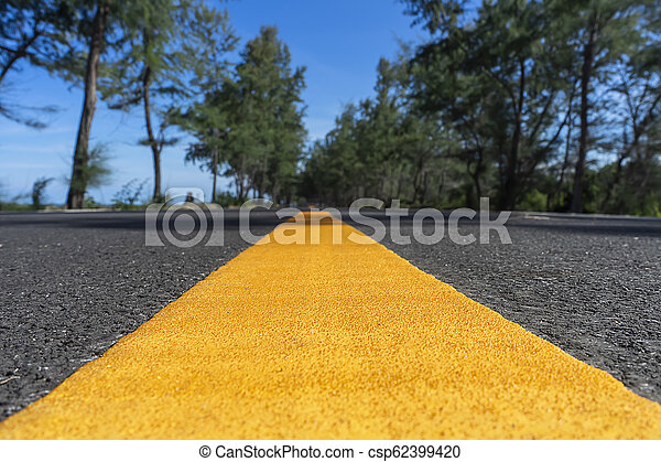 Yellow line on road with pine trees and blue sky. - csp62399420