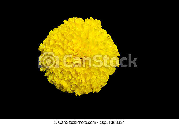 Top View Of Yellow Marigold Flower Isolated On A Black Background