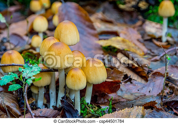 Yellow mushrooms growing in the forest - csp44501784