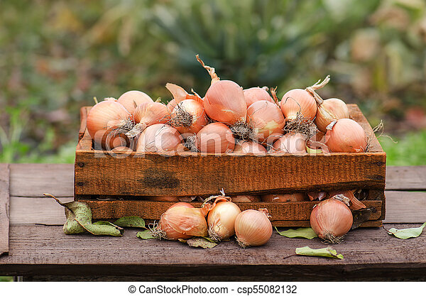 Yellow onion in box - csp55082132