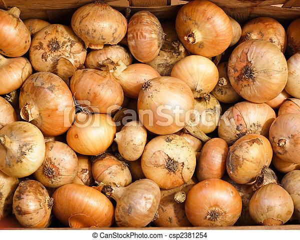 Yellow Onions - csp2381254