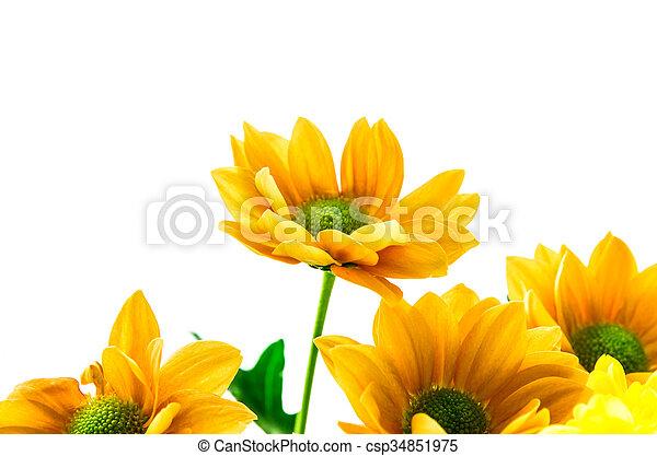 yellow orange flowers - csp34851975