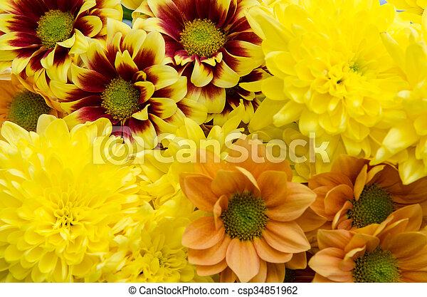 yellow orange flowers - csp34851962
