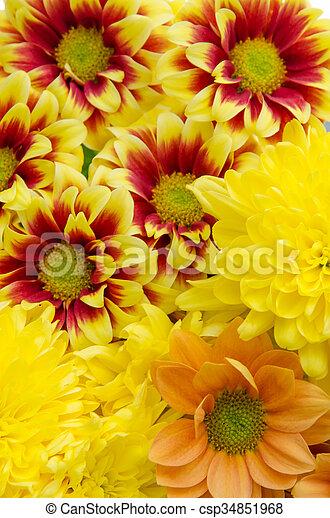 yellow orange flowers - csp34851968