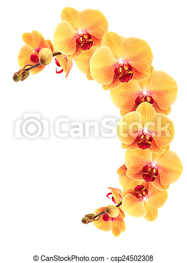 Yellow orchid border decoration element nice border made from yellow orchid border csp24502308 mightylinksfo