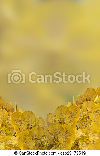 Yellow orchid flowers stock photography search pictures and photo yellow orchid flowers csp23173519 mightylinksfo
