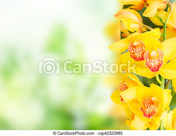 Yellow orchid flowers border with copy space on green bokeh background yellow orchid flowers csp42323985 mightylinksfo