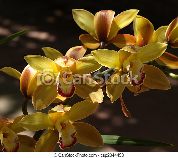 A colorful close up of yellow orchid flowers stock photos search yellow orchid flowers csp2044453 mightylinksfo