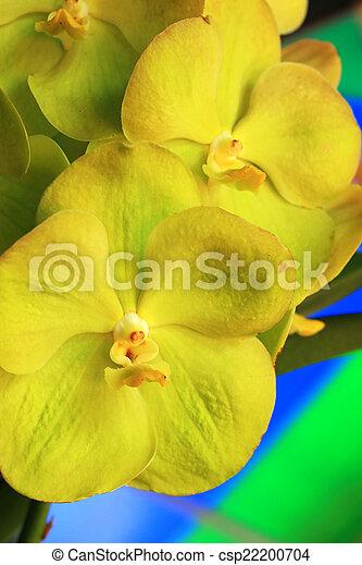 Yellow orchid vanda flowers yellow orchid vanda flowers csp22200704 mightylinksfo