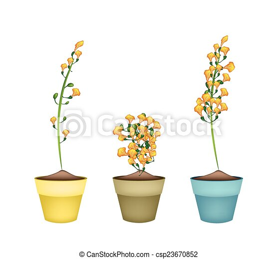 Yellow padauk flower in ceramic flower pots beautiful flower yellow padauk flower in ceramic flower pots csp23670852 mightylinksfo