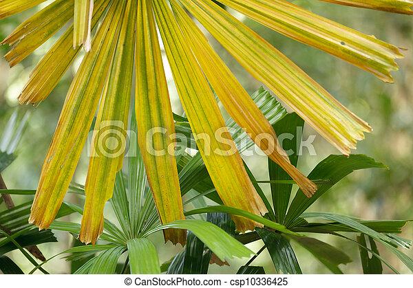 Yellow palm tree leaves details yellow palm tree csp10336425 mightylinksfo
