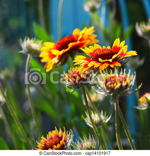 Yellow Red Flower Wallpaper Background Nature Summer Spring
