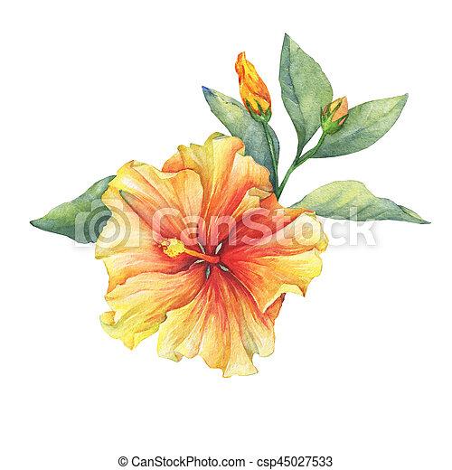 Yellow red hibiscus flower hand drawn watercolor painting on white yellow red hibiscus flower hand drawn watercolor painting on white background mightylinksfo