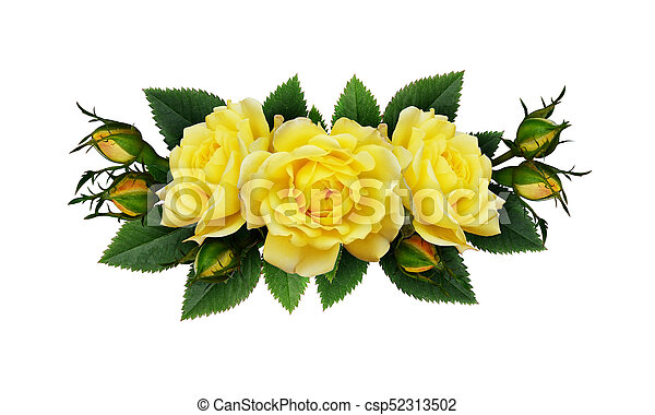 Yellow rose flowers arrangement isolated on white yellow rose flowers arrangement csp52313502 mightylinksfo