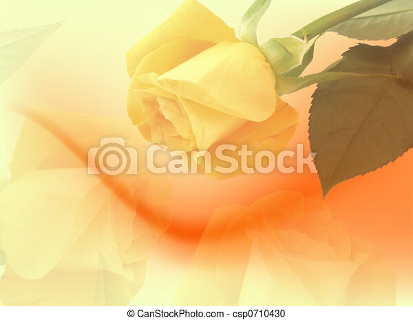 Yellow roses backdrop - csp0710430