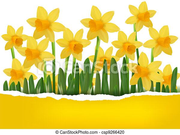 yellow spring flower background with ripped paper vector