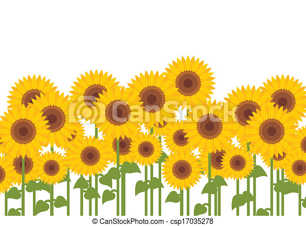 Sunflower Line Drawing : Yellow sunflowers vector background vectors illustration search