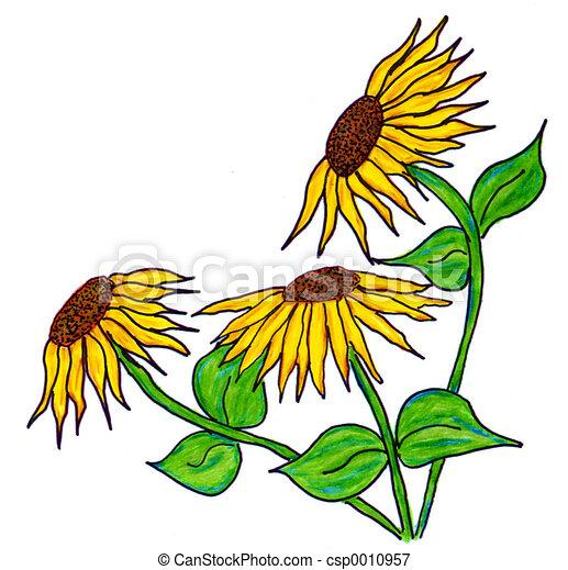 Yellow sunflowers - csp0010957