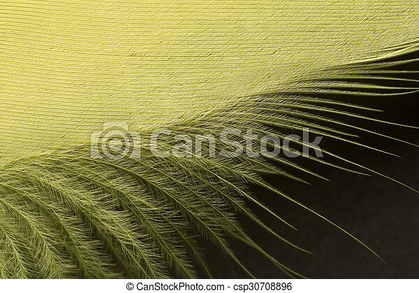 Yellow textured feather close up - csp30708896