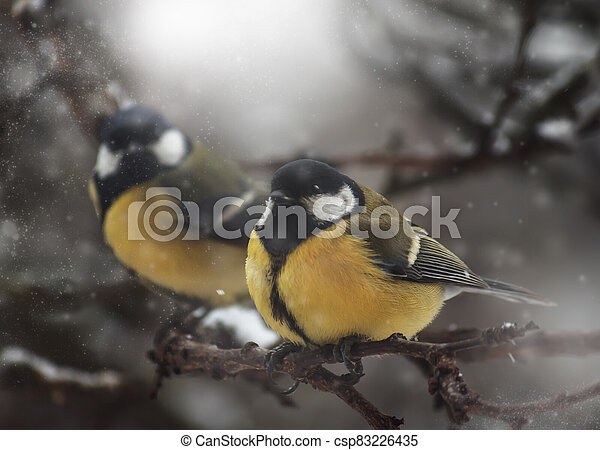 Yellow tit on winter background. Close-up. Unrecognizable place. Selective focus - csp83226435