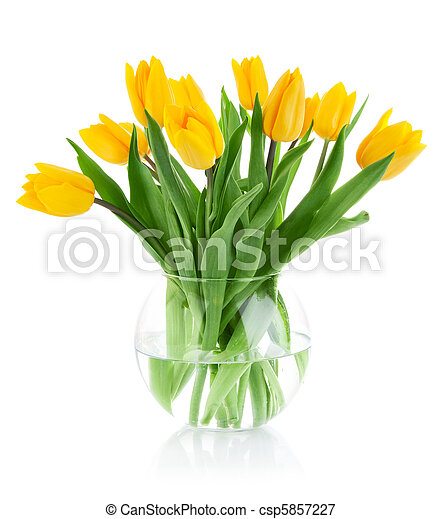 yellow tulip flowers in glass vase - csp5857227