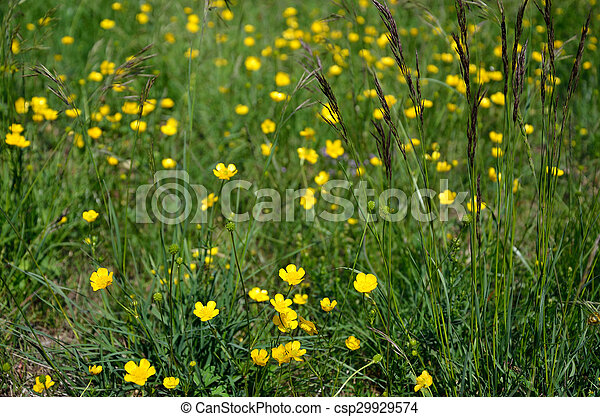 Yellow Wild Mountain Flowers And Green Grass In Spring
