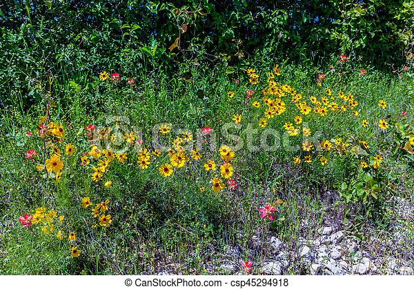 Yellow Wildflowers In Texas Various Texas Wildflowers Including