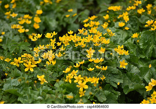 Yellow wildflowers in the spring stock photography search pictures yellow wildflowers in the spring csp44964600 mightylinksfo