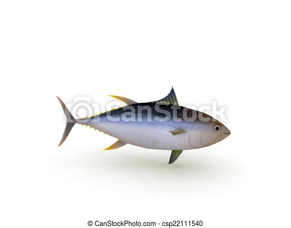 yellowfin tuna - csp22111540