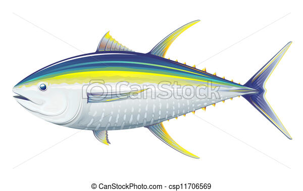 Yellowfin tuna - csp11706569