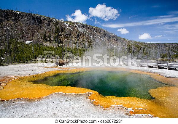 yellowstone - csp2072231