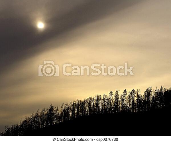 yellowstone, treeline - csp0076780