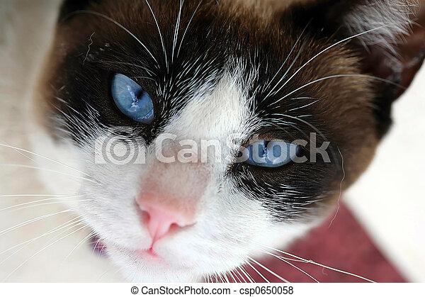 yeux bleus - csp0650058