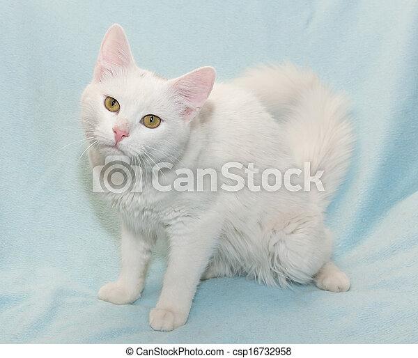 yeux s ance poil chat jaune blanc yeux bleus s ance images de stock rechercher des. Black Bedroom Furniture Sets. Home Design Ideas